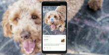Buy Essay on Google Lens