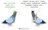 double speak